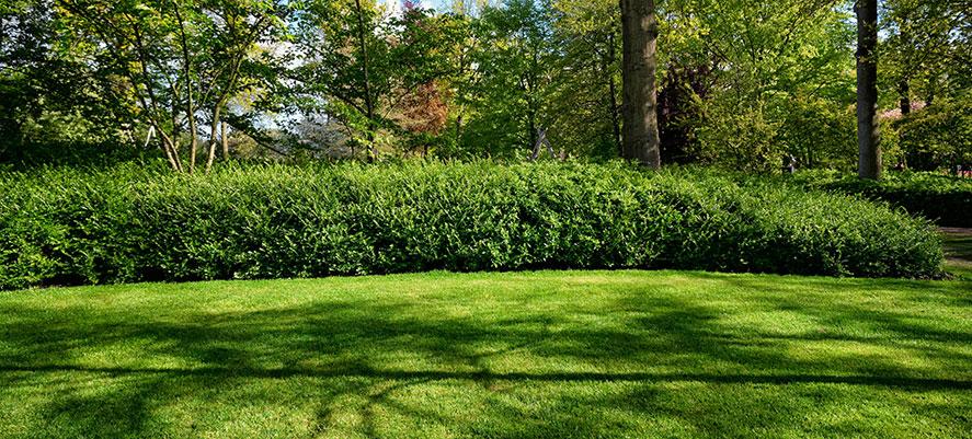 Vem tar hand om gräsmattan?