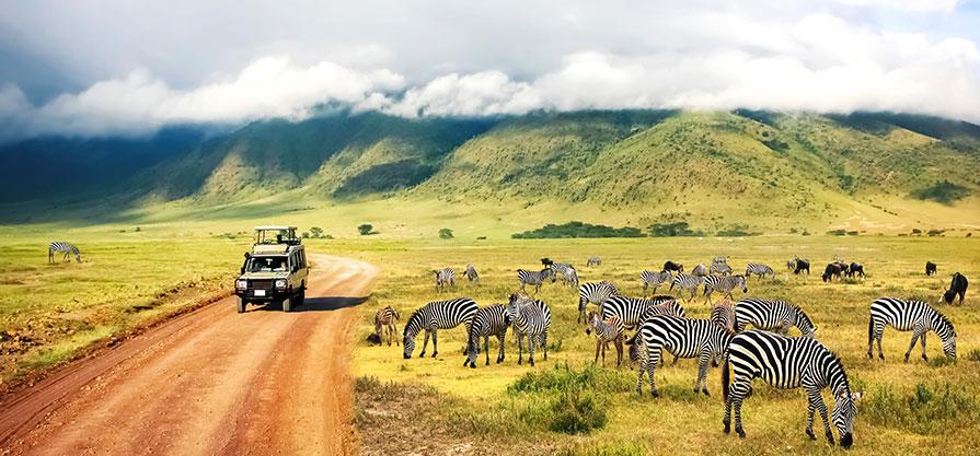Tips som gör din safariresa roligare